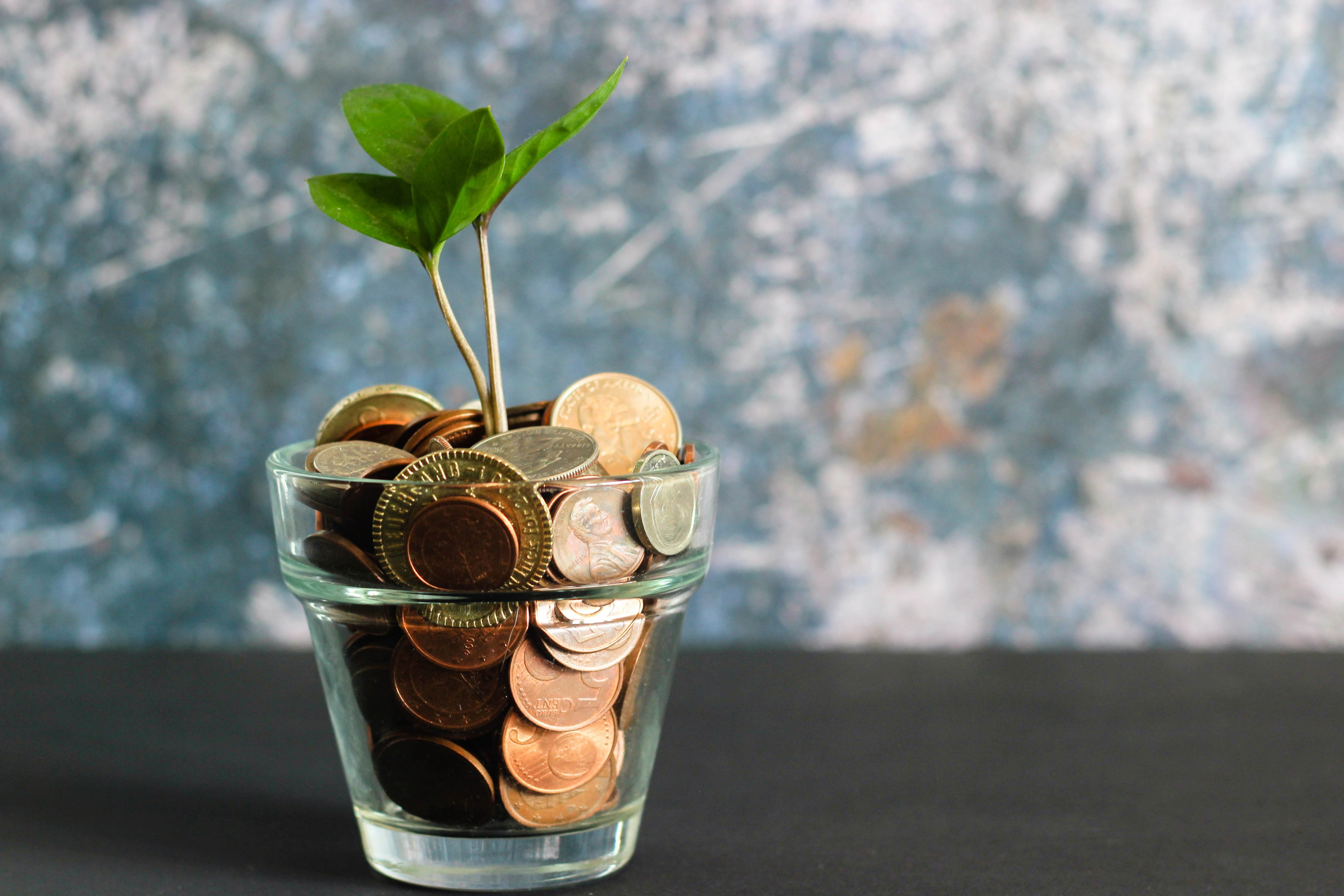 Plant growing out of money cup